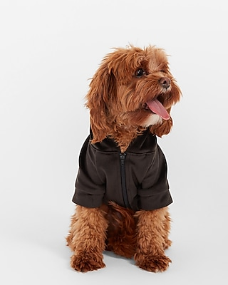 Deals on Express Cozy Pom Dog Hoodie